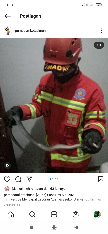Waspada Kemunculan Ular di Rumah, Segera Lapor Damkar