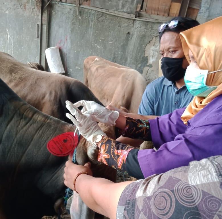 Siap-siap! Vaksin Gratis Flu Burung dan Rabies di Cimahi Dimulai